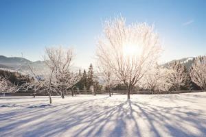 paysage neige, moustique en février