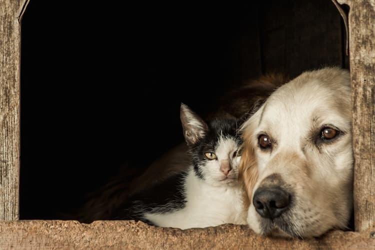 un chat et un chien à une fenêtre