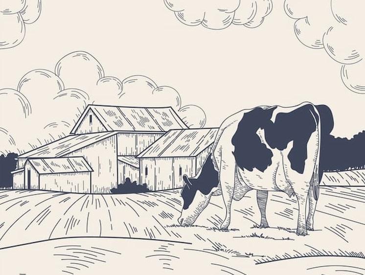 illustration mouche à la campagne