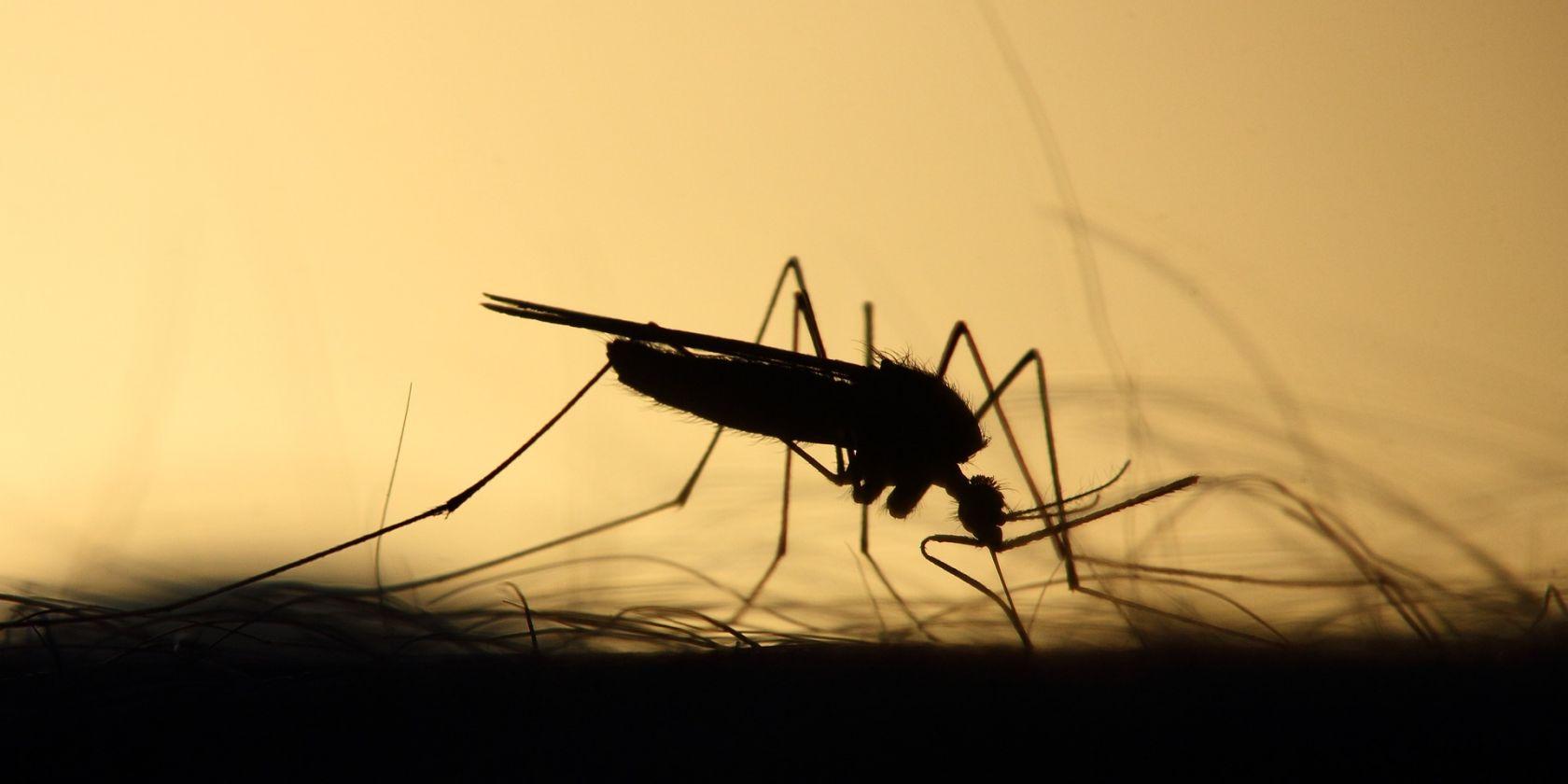 journée mondiale du moustique