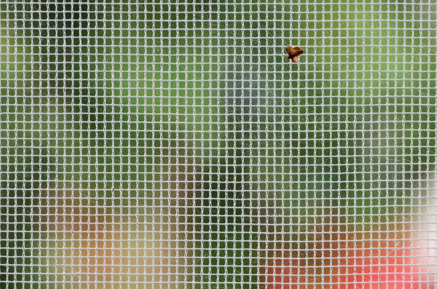 Moustiquaire avec insecte coincée, nettoyer moustiquaire