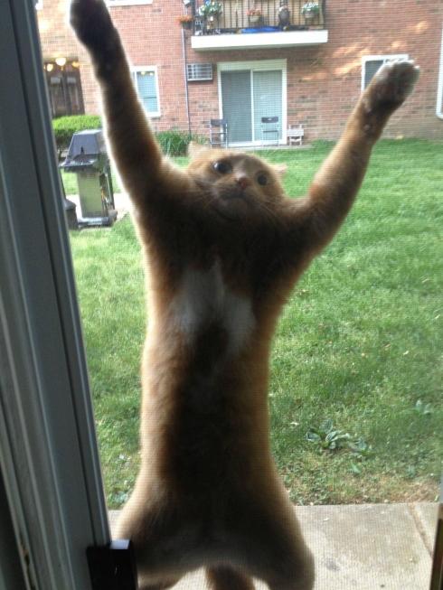 chat accroché une moustiquaire